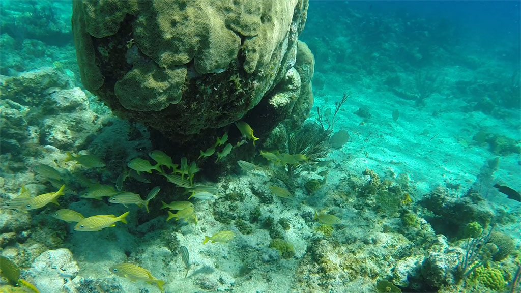Snorkeling excursion with Talbot adventure